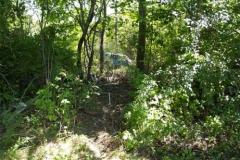 woods5_lg_499_374_95